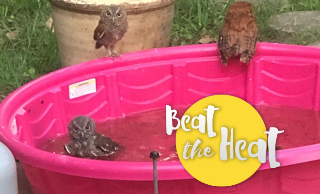 FI Owls Are Having A Pool Party