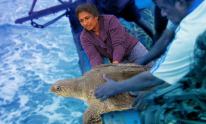 Fl-Chennai-woman-behind-one-of-India's-largest-sea-turtle-conservation-programmes