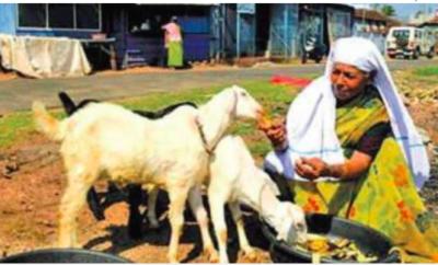 Kerala Woman Goats