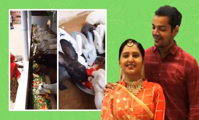 Couple-Invites-Cows,-Monkeys-&-Rabbits-To-Their-Wedding-FeastCouple-Invites-Cows,-Monkeys-&-Rabbits-To-Their-Wedding-Feast