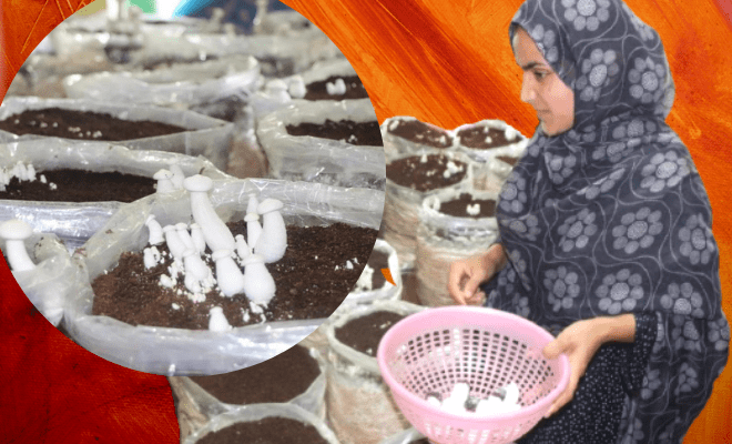 Pulwama girl grows organic mushroom at home to study, support family