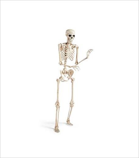 SkeletonHalloween_Hauterfly