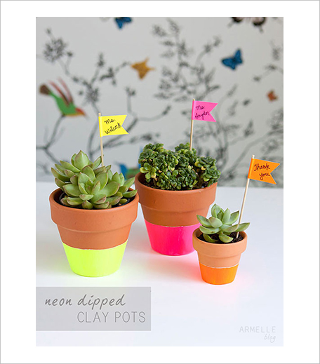 Potted_Plants_Dorm_Hauterfly