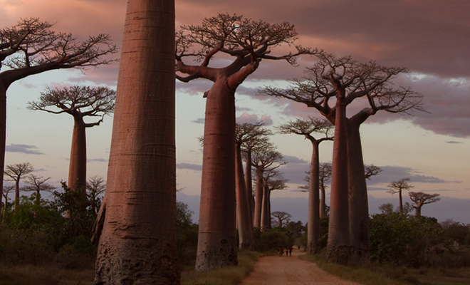 Avenue of Baobab_Hauterfly
