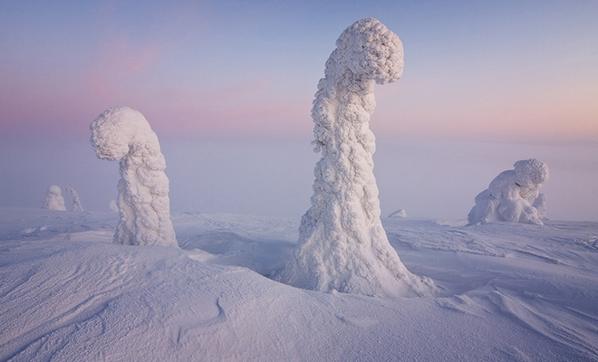 Sentinels of artic_Hauterfly