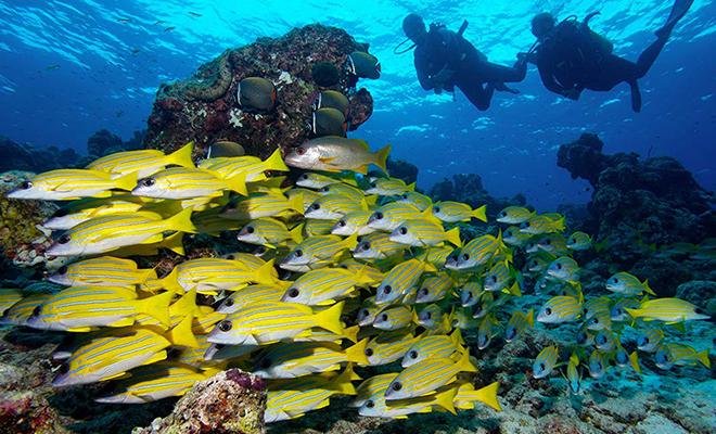 Scuba diving Maldives_Hauterfly