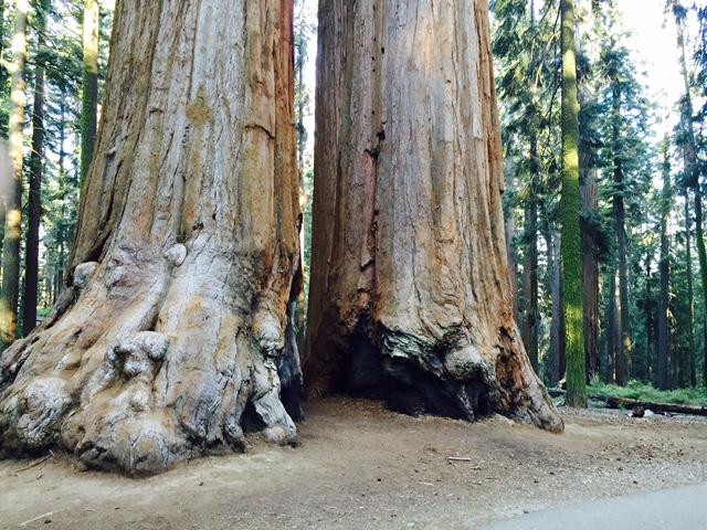 US-travel-california-hauterfly