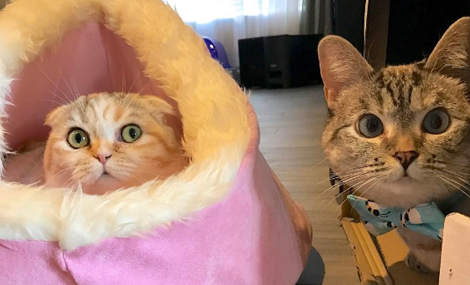 CatStory_Featured_Hauterfly