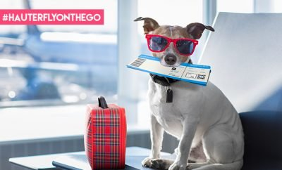 Flying With Pets_Featured_Hauterfly