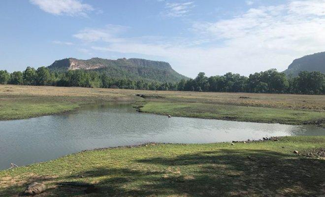 Taj Safaris in MP_Forest_Hauterfly