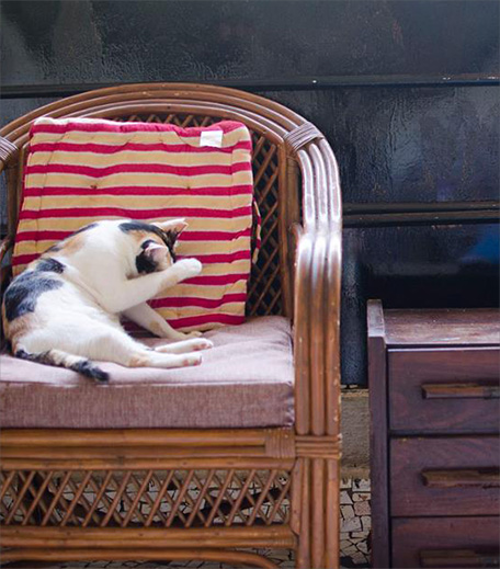 Cat Cafe in post_Hauterfly