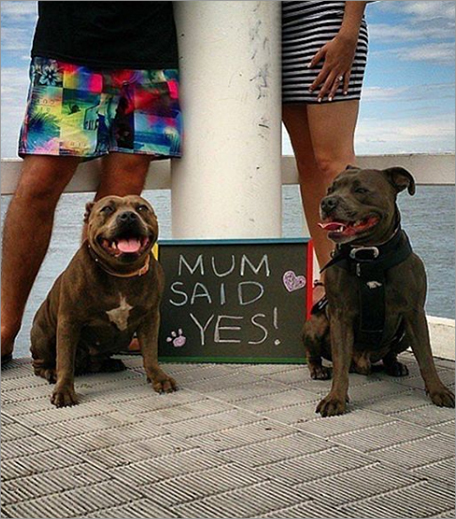 Dogs Engagement Announcement
