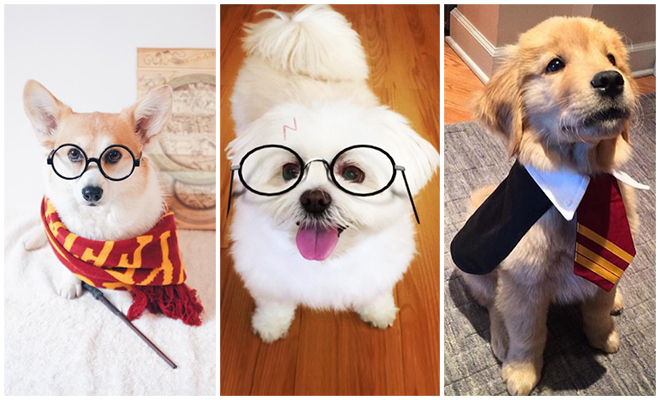 Harry Potter Pups Featured_Hauterfly