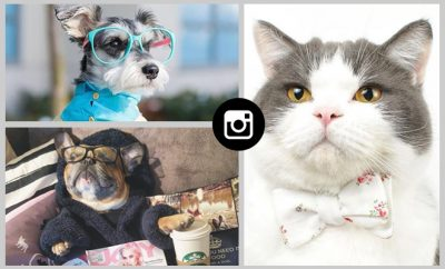 Stylish pets of Instagram_hauterfly